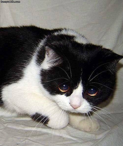 lonely sad cat - photo #47