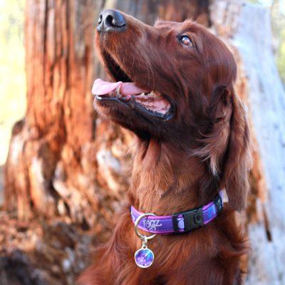 ID-Tag-Metal-CH-PurpleForest-Lifestyle