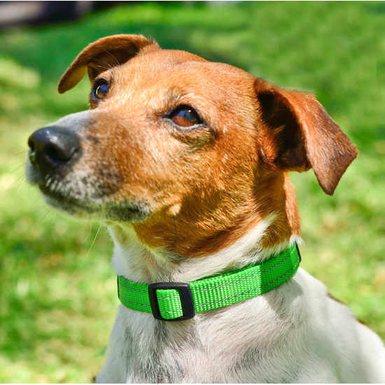 Side-Release-Collar-Reflective-Stitching-HB-Dog