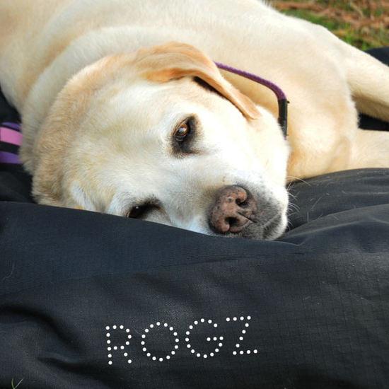 Beds-Podz-Flat-Pod-Dog