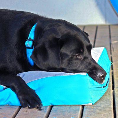 Beds-Podz-Flat-Pod-FPL-CH-TurquoisePaw-Lifestyle