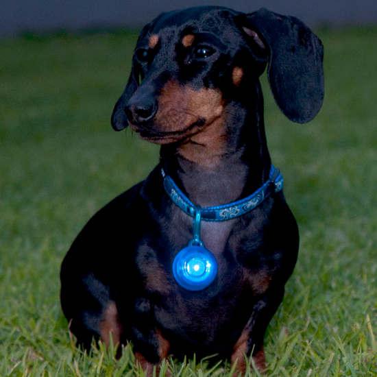 ID-Tag-Roglite-IDL02-Dog