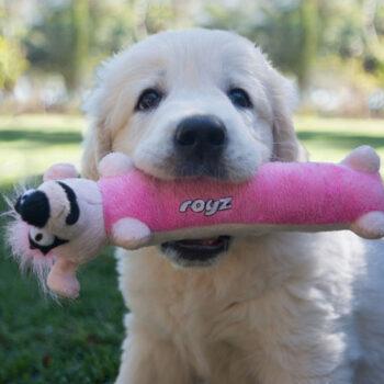 Pupz-Toys-Yotz-Sausage-Lifestyle
