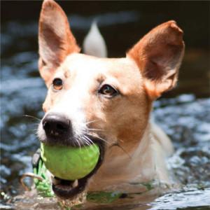 Toys-Asteroidz-Balls-AS-Dog