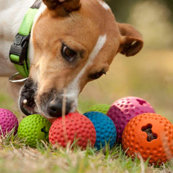 Toys-Gumz-Balls-GU-Dog
