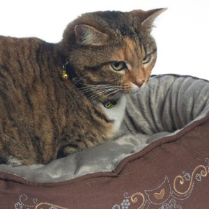 Cats-Beds-Snug-Podz-CP07-Bronze-Filigree-Cat