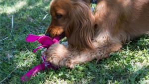 slider-cowboyz-dog-toys