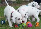 PuppiesChewToy