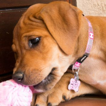 Pupz-ID-Tagz-Instant-Lifestyle-on-Reflecto-Pink
