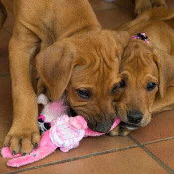 Pupz-Toys-Yotz-Cowboyz-Lifestyle