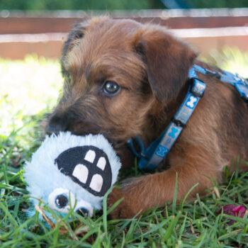 Pupz-Toys-Yotz-Fluffy-Grinz-Lifestyle