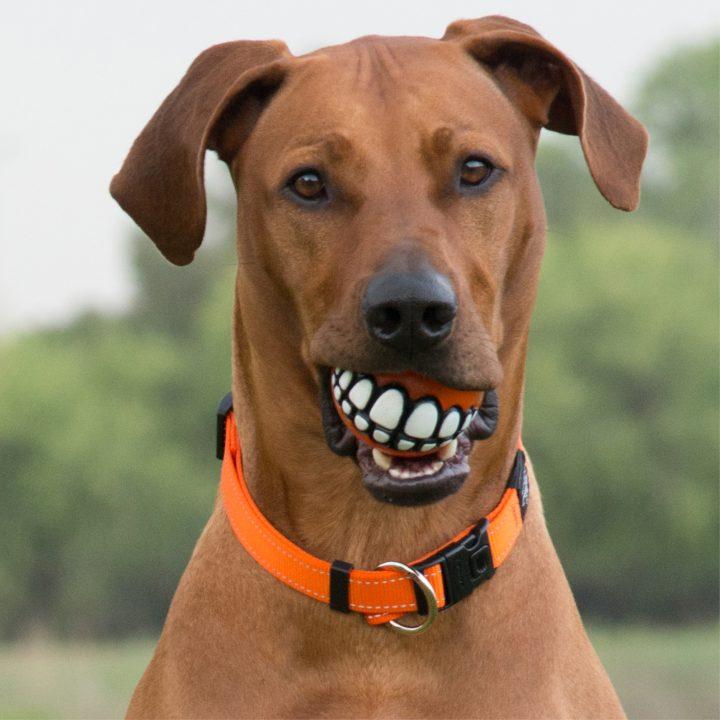 Dog Toys Balls : Grinz ball rogz