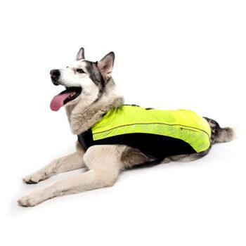 Clothing-Skinz-Rainskin-Dog