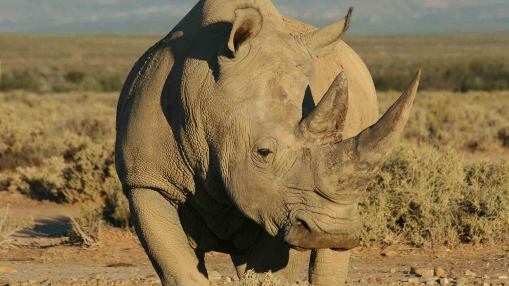 rhinos08