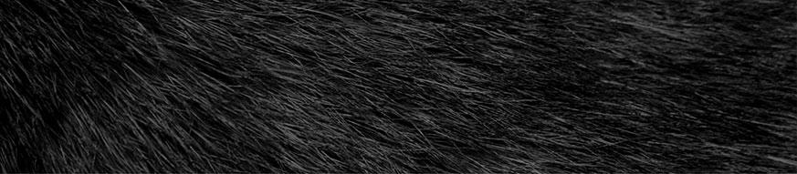 coat_black